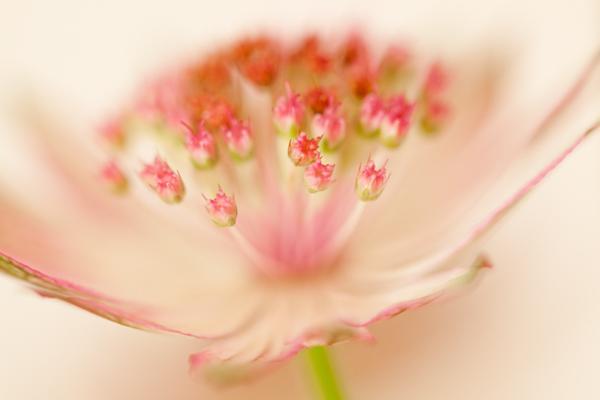 221_Flowers_47_PNT_U_P_SRN_PFO